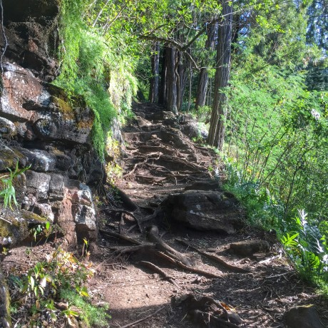 Hogsback, the first climbs/start of the race